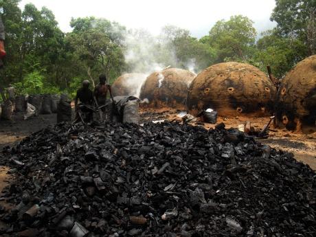 Curso online grátis de Produção de Carvão Vegetal