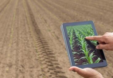 Curso online grátis de Projetos Agropecuários