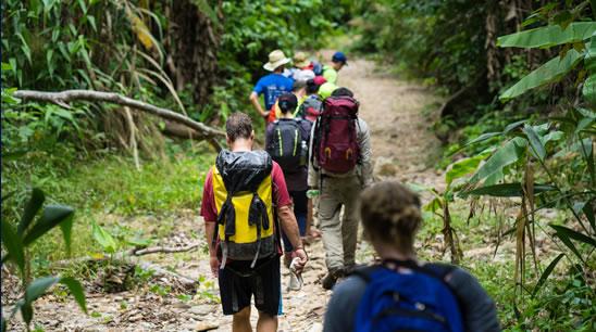 Curso online grátis de Teoria da Sobrevivência na Selva