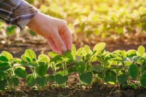 Curso online grátis de Agricultura Familiar e Desenvolvimento Agrário