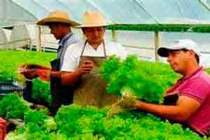 Curso online grátis de Agricultura Orgânica