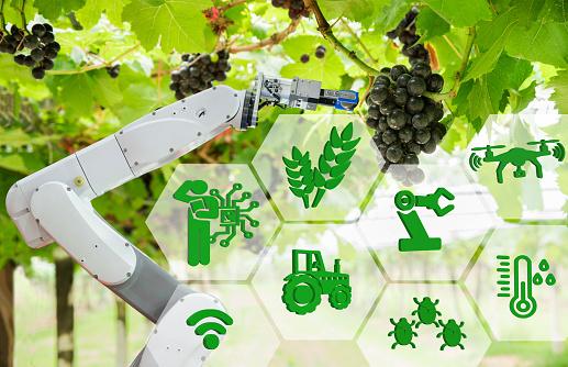 Curso online grátis de Auxiliar Agrícola