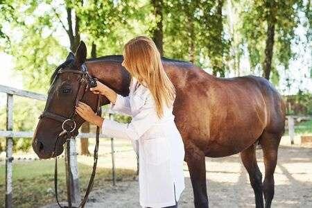 Curso online grátis de Auxiliar de Veterinário para Equinos