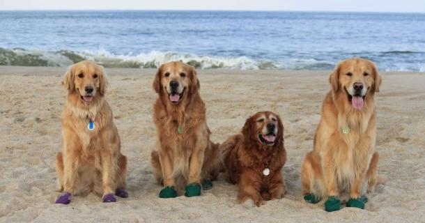 Curso online grátis de Cães em Adestramento