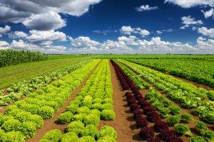Curso online grátis de Produção Orgânica de Hortaliças