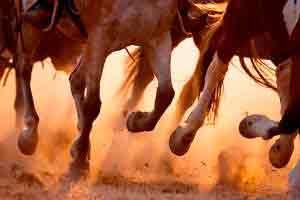 Curso online grátis de Casqueamento e Ferrageamento em Equinos