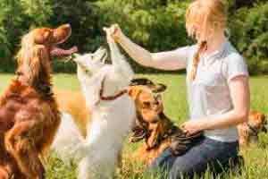 Curso online grátis de Cuidador de Cães