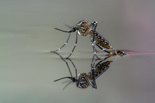 Curso online grátis de Combate à Dengue, Zica e Chikungunya