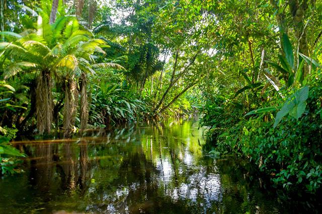 Curso online grátis de Fauna e Flora Amazônica