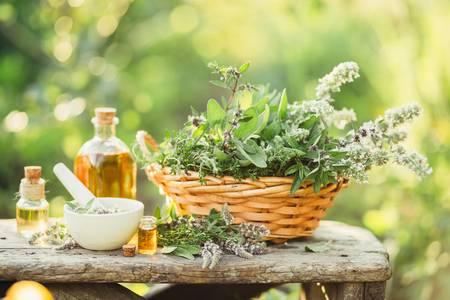 Curso online grátis de Cultivo e Uso de Plantas Medicinais