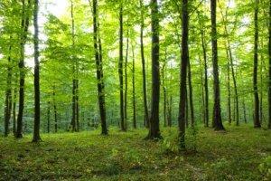 Curso online grátis de Conceitos Sobre Reflorestamento