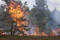 Curso online grátis de Básico de Combate à Incêndio Florestal