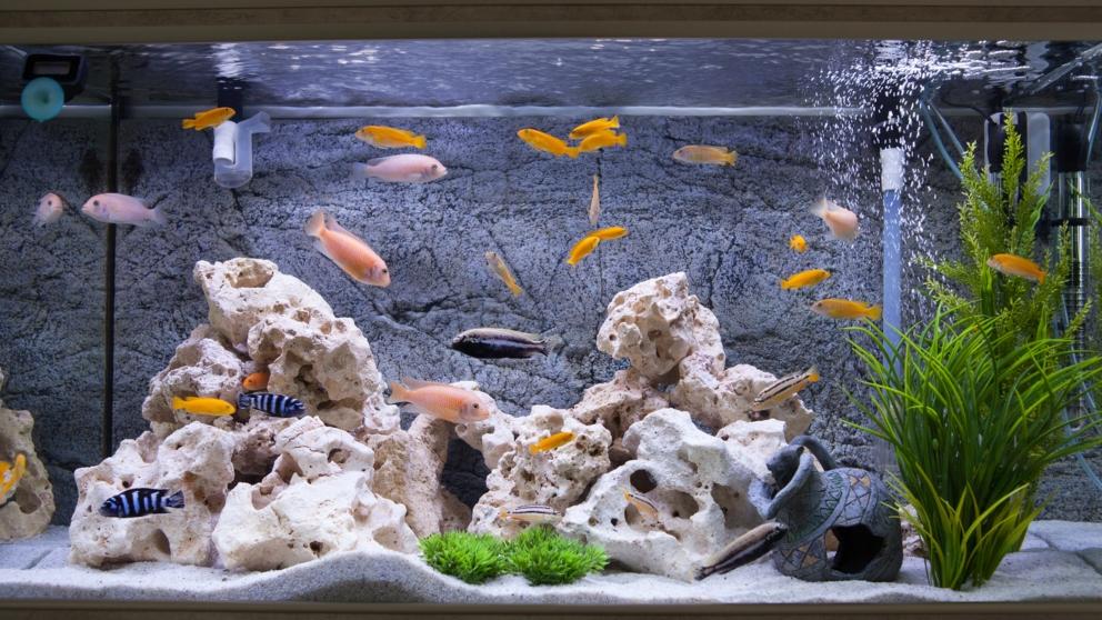 Curso online grátis de Aquarismo