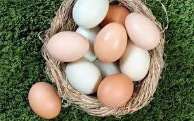 Curso online grátis de Produção de Ovos Orgânicos