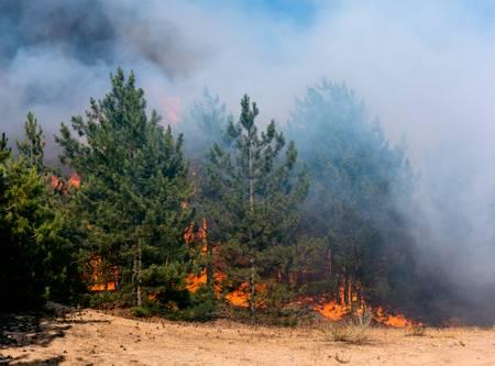 Curso online grátis de Noções sobre Prevenção e Combate a Incêndio Florestal