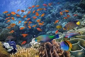Curso online grátis de Indução de Peixes